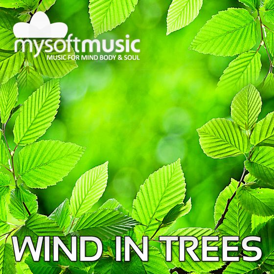 Wind In Trees 40 Minutes
