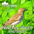 Wind In Trees And Birds 60 Minutes